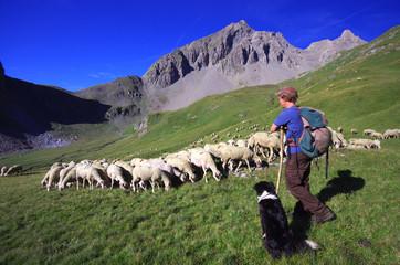 vie d'alpage - berger et son troupeau de moutons