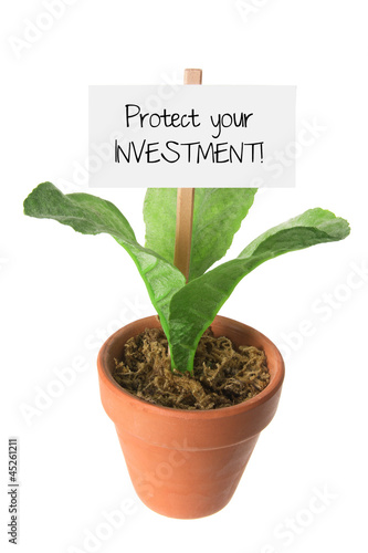 Pot Plant with Placard