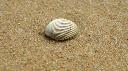 Sea shell on the tropical sandy beach