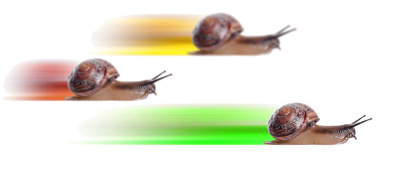 Concept. fast snail with colored silhouette.