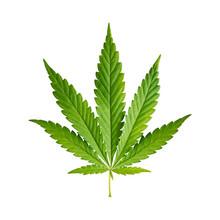 "Постер, картина, фотообои ""Cannabis leaf isolated on white background"""