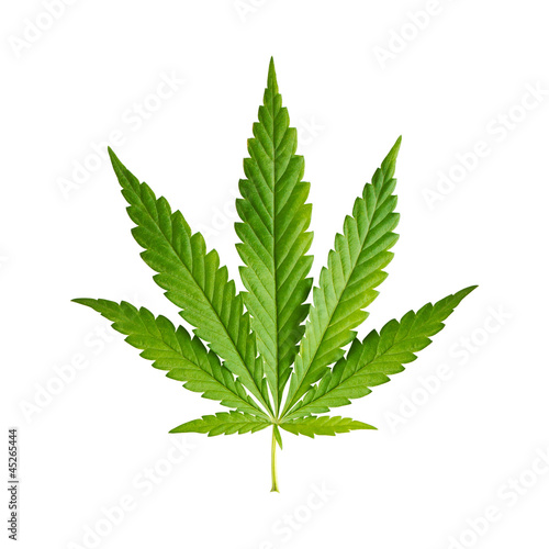 Leinwanddruck Bild Cannabis leaf isolated on white background