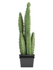 Pilosocereus cactus or hairy cactus