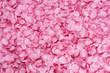 Petali di rosa - 45269023