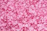 Fototapety Petali di rosa