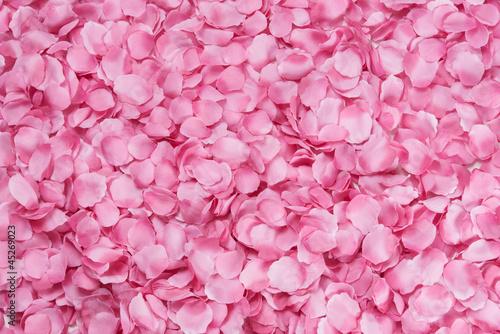 canvas print picture Petali di rosa