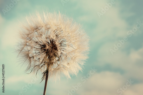 Dandelion Isolated on blue cloudscape