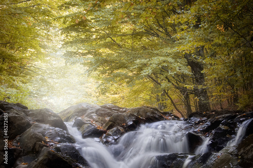 river in a forest with golden leafs in autumn