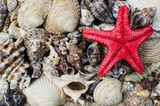 Fototapete Seashell - Hintergrund - Strand