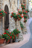 Fototapety Geranium flowers in streets of Assisi, Umbria, Italy
