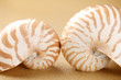 Nautilus shells  in sea sand