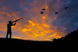 Fototapety Bird Hunting Silhouette