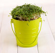 Fresh garden cress on pail on wooden table