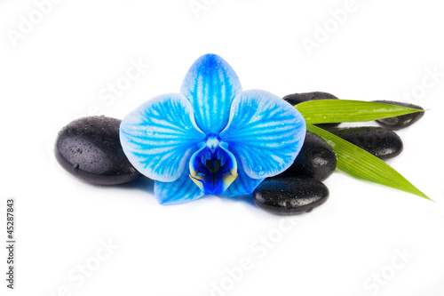 zen pebbles with blue orchid isolated on white