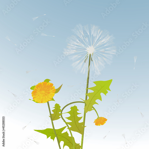 Dandelions decorative card