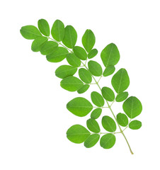 Moringa oleifera leaves isolated on white background