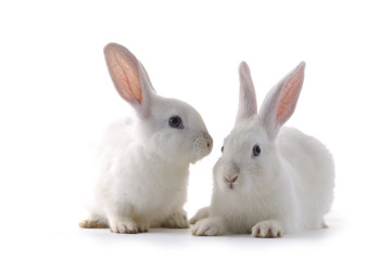 Couple cute white baby rabbits.