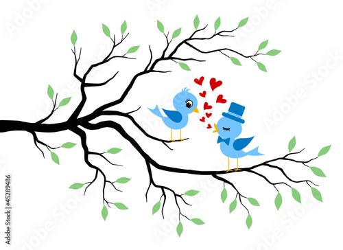 Kissing Birds in love at branch