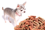 Chihuahua dog and treats