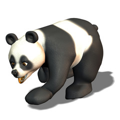 Panda Bär laufen