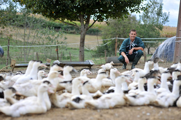 Ducks outside de farm and farmer in background