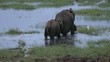 elephant with a calf in swamp, tanzania, serengeti, africa