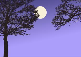 Baum Nacht