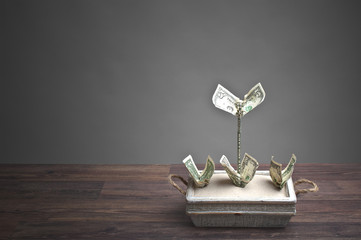 Money-plants made from dollars in a flowerpot - money concept
