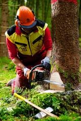 Forstarbeiter bei Baumfällarbeiten