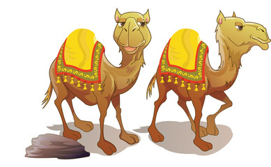 Two Camels, illustration