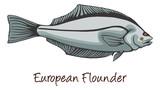 European Flounder, Color Illustration poster