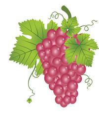 Red Grapes, illustration