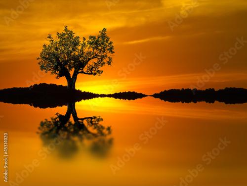 El arbol del lago