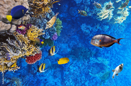 Coral and fish in the Red Sea.Egypt - 45314201