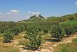 Landschaft im Piemont nahe Asti