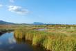 The pond of San Teodoro - Sardinia - Italy - 581