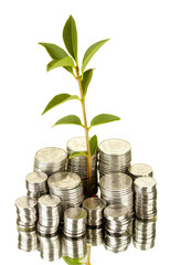 plant growing out of silver coins isolated