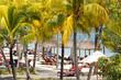 plage sous les cocotiers