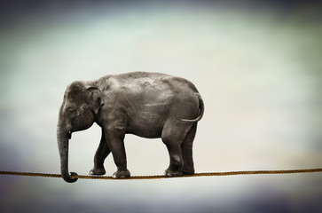 elephant walking tightrope