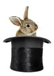 Rabbit bunny in top hat magic trick isolated