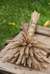 sheaf of wheat