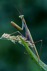 look in the eyes of a mantis