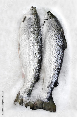 Fresh salmon lying in the ice