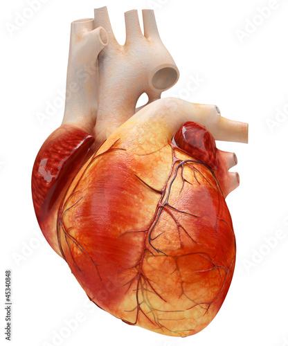 heart - 45340848