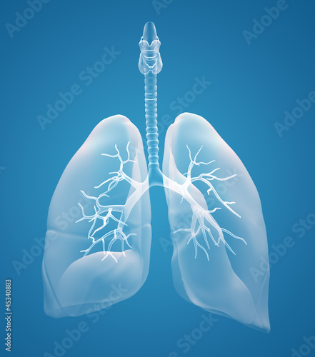 lungs x-ray - 45340883