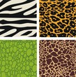Set of 4 animal skin patterns