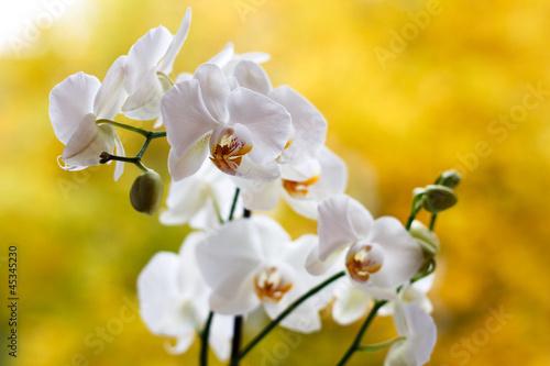 Fototapeten,blühen,knospe,exotisch,blume