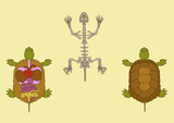 zoology, anatomy of reptile, cross-section and skeleton poster