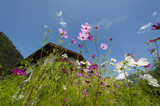upward look of purple and pink flowers with summer sky