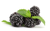 Fototapety beautiful blackberries with leaf isolated on white